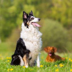 ateliers education canine somain